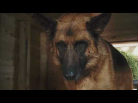 Download Cats & Dogs: The Revenge of Kitty Galore Official Trailer
