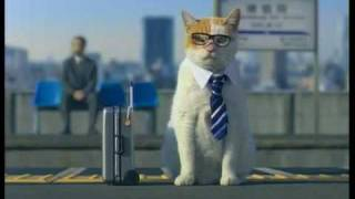 Cute Japanese Kitty Cat Commercial Jalan