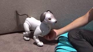 Aibo - собака-робот от Sony -  IFA Berlin 2018