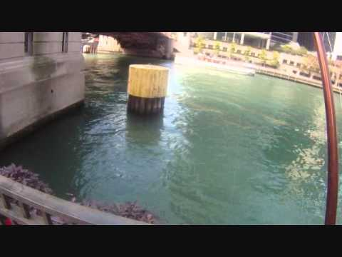 THE URBAN ANGLER - Down town Chicago Small  Mouth Bass-