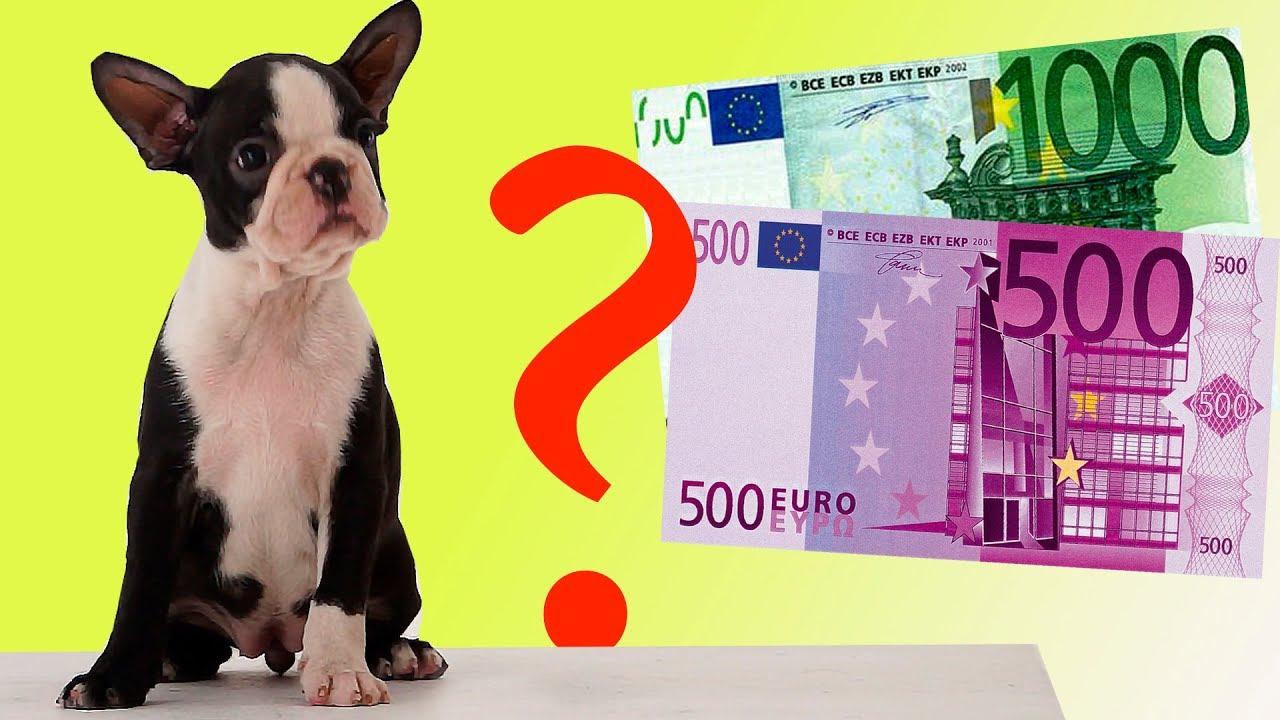 Для тех кто любит бультерьеров. Продаю щенка миниатюрного бультерьера!. Так же вы можете купить портфель с изображением бультерьера и.