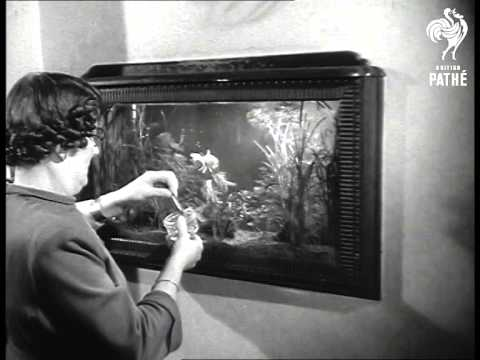 Fish Tanks (1951)