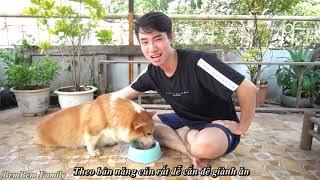Chó cắn người | Cách dạy những chú chó Hung Dữ trở nên ngoan hiền | BemBem Family