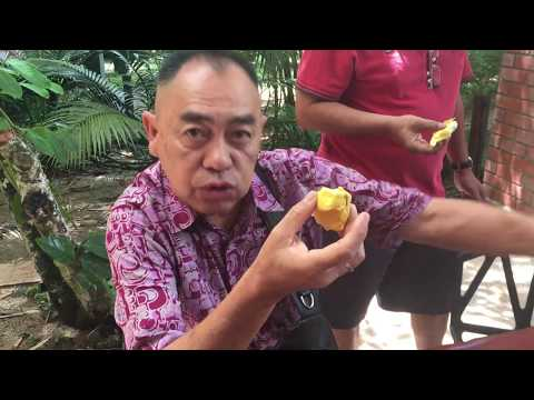 Malaysia Must Visit 2018 [lembah Temir] nature lover,durian farm and resort