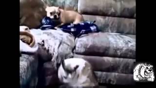 Брутальные драки кошки против собак