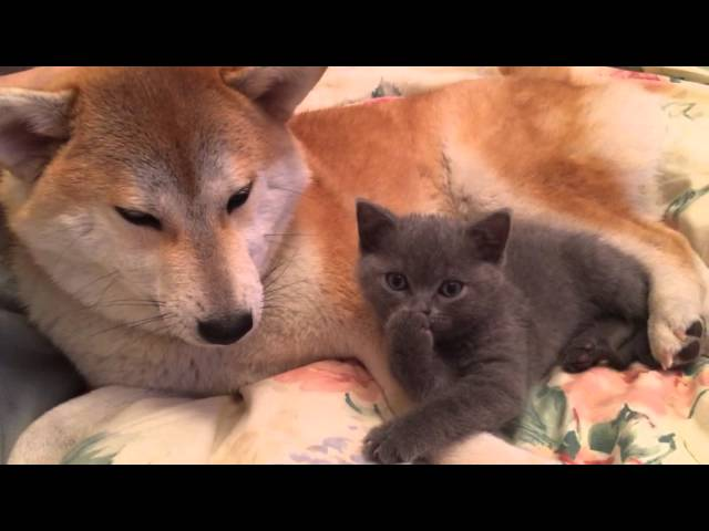 A fox and a kitten :)