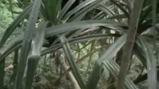 硫黄島11・栗林壕と通信機(兵団司令部壕)