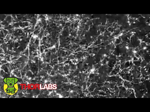 Deep Brain Imaging - Thorlabs Multiphoton Microscope