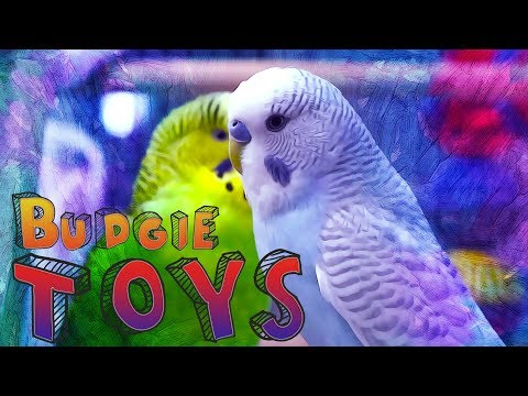 Budgie Toys   How to keep your bird entertained?