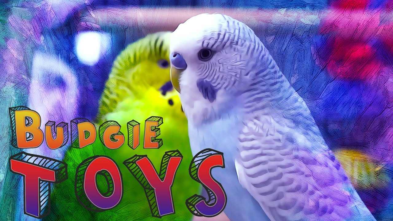 Why Is My Budgie Not Playing With Its Toys – Wow Blog