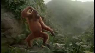 ► Un orang-outan qui danse sur de la dark techno ! (parodie trash)