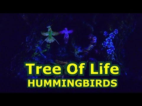 Tree of Life Awakenings - HUMMINGBIRDS - Disney's Animal Kingdom NIGHT - Awaken Summer