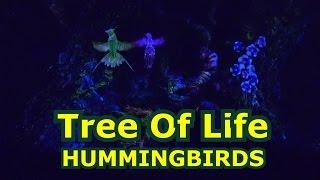 Tree of Life Awakenings - HUMMINGBIRDS - Disney