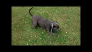 Flexi Lead Fail Extendible Retractable Dog Lead Failure