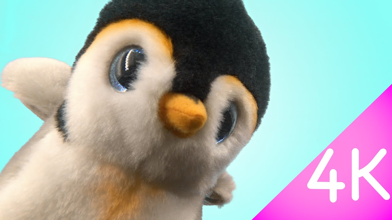 0138c6ba3cf Ty Beanie Babies - Pongo 4k - YouTube