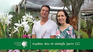 Como Adubar Orquídeas - Parte 2/How to Fertilize Orchids - Part 2 - A Menina do Dedo Verde