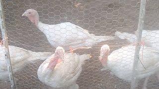 Quick Farm Chat