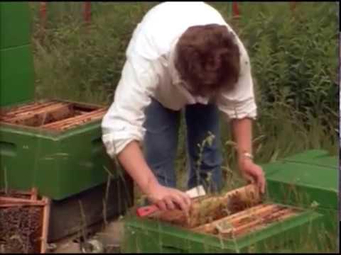 C1801   Rearing of Queen Bees