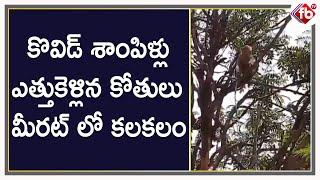 కొవిడ్ శాంపిళ్లు ఎత్తుకెళ్లిన కోతులుమీరట్ లో కలకలం| FB TV | Asvi Media