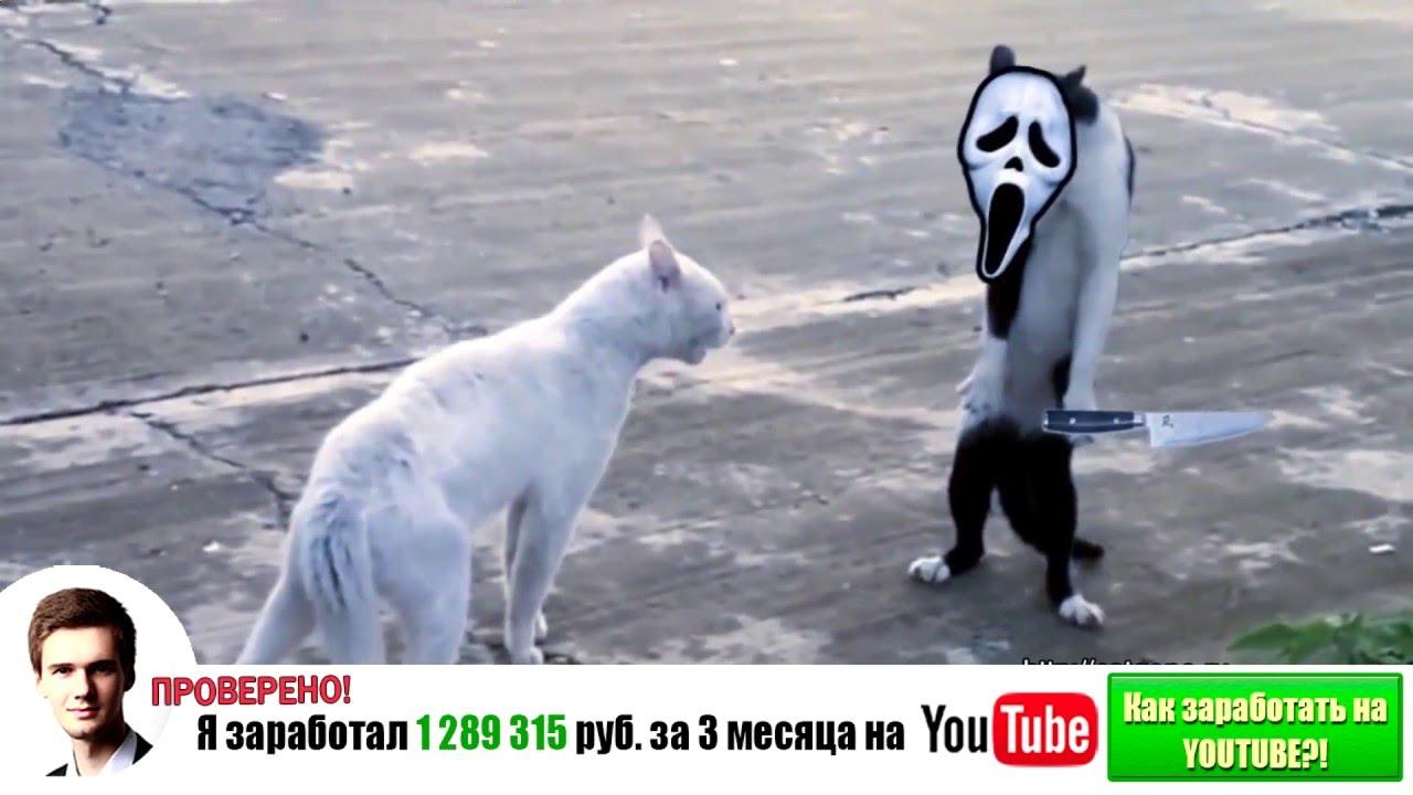 Самые смешные кошки 2014 #4 - YouTube