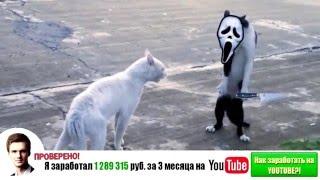 Самые смешные кошки 2014 #4(http://youtu.be/KVXbGfi1xx8 - ТЕБЕ ПОДАРОК от нашего спонсора! Подпишись: ..., 2014-09-27T14:23:35.000Z)