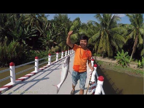 CÂU CÁ TRA SÔNG MIỀN TÂY | HUYNH KHOA FISHING