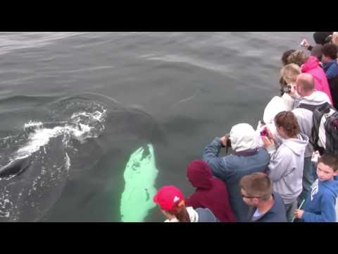 Whale Watching-Cape Ann Whale Watch Gloucester MA in HD