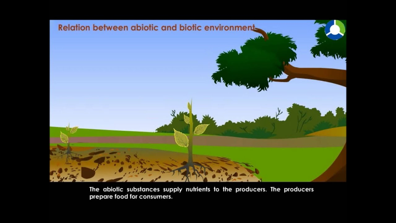 Relation between abiotic and biotic environment  YouTube