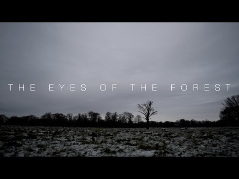 A* GCSE Media Horror Film Opening | The Eyes of the Forest