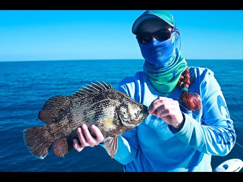 Offshore Tampa Tripletail Fishing Action - How to Catch Tripletail
