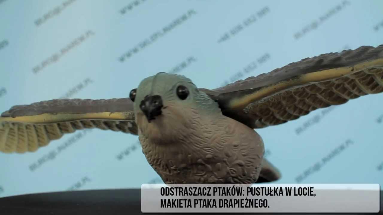 Odstraszacz Ptaków Pustułka W Locie Makieta Ptaka Drapieżnego