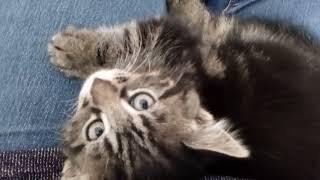 Маленькие котята I С добрым утром