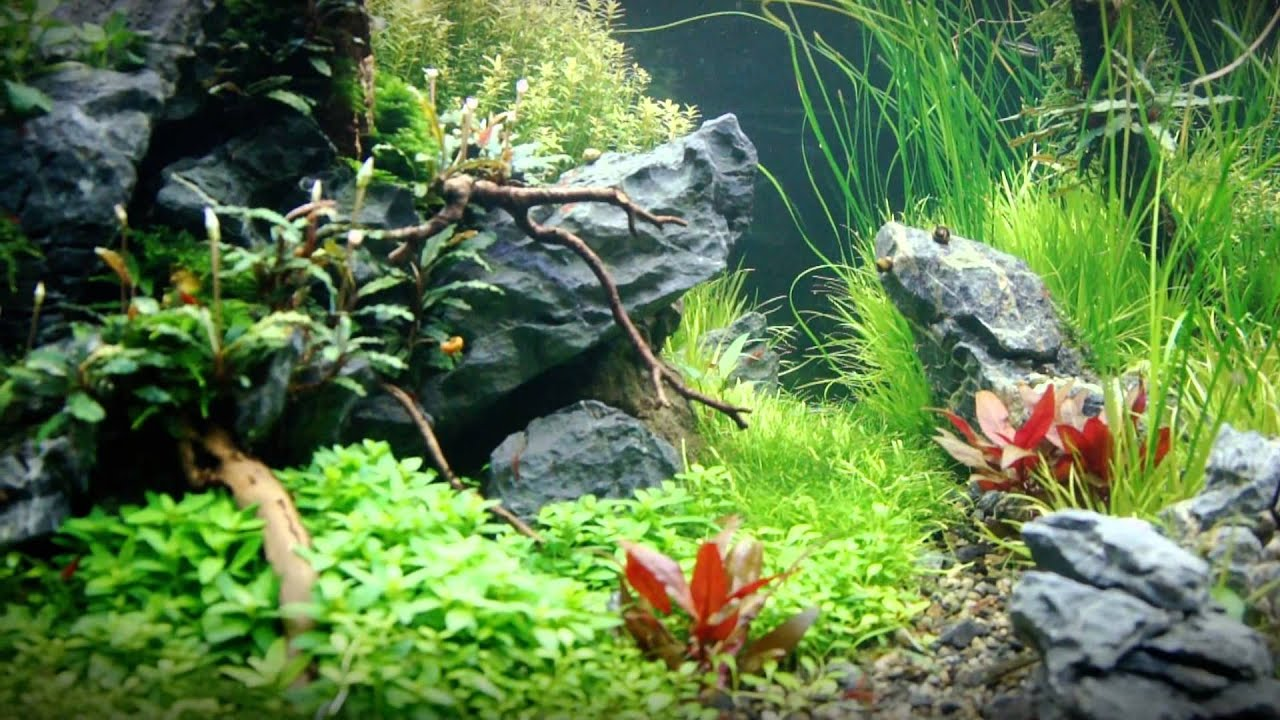 Captivating Sticksu0027n Stones | Freshwater Aquascape Part III   YouTube