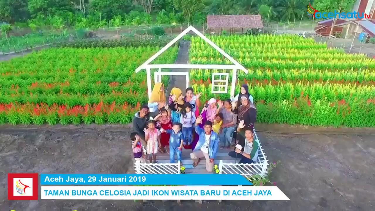 Taman Bunga Celosia Jadi Ikon Wisata Baru Di Aceh Jaya Youtube