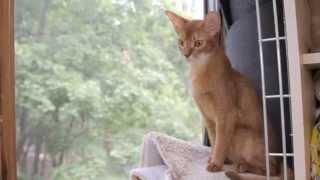 Все О Домашних Животных: Кошачьи Секреты