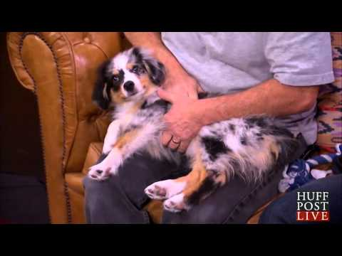How to Perform the Heimlich Maneuver On Dogs