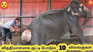 குட்டி போடும் விலங்குகள் || Ten Animals Giving Birth || Tamil Galatta News