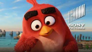 ANGRY BIRDS LE FILM:  Pub Télé -  Oh mon doux