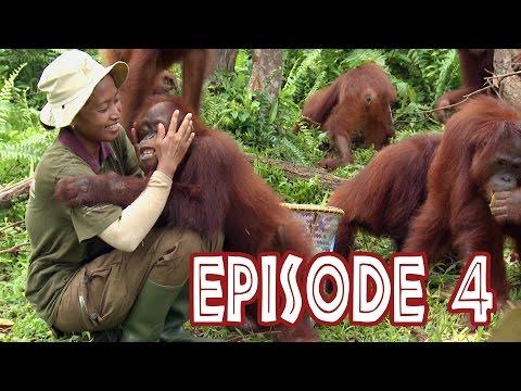 We Love Orangutans - 'Babysitter Coordinator, Sri Rahayu'