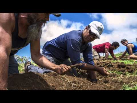 Unearthing Hawaii's lost agricultural traditions