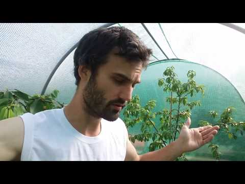 How to start growing your own food.