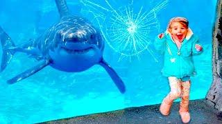 Funniest Moments Baby Meet Animals August - Life Funny Pets Video | baby shark doo doo