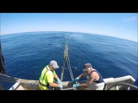 Flathead Fishing In The South East Trawl Fishery- Danish Seining
