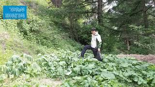 거북농부(마라톤농부)의 봄 산나물 채취작업(제10호)