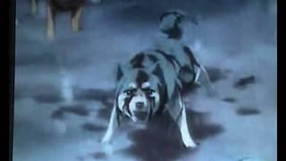 GDW Wolfs Rain DoLL Terra