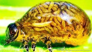 10 مخلوقات تثبت أن القوى الخارقة موجودة في الواقع