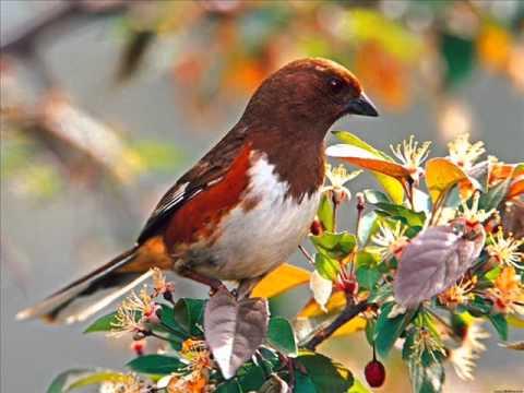 Aves en primavera la paloma ottorino respighi youtube - Primavera uccelli primavera colorazione pagine ...