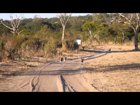 Kasane 2014 (Botswana)