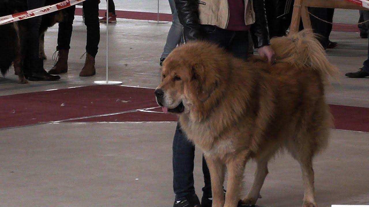 Krajowa wystawa ps&#24...