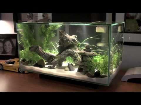 Fluval EDGE Fish Tank [HD]